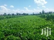 3 Acres for Sale in Mang'u, Kabarak | Land & Plots For Sale for sale in Nakuru, Menengai West