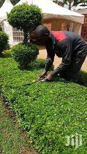 Landscaping Services | Landscaping & Gardening Services for sale in Nairobi, Kileleshwa