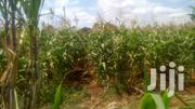 30 Ecrs 6 Ecrs Agriculture Land | Land & Plots For Sale for sale in Kajiado, Kimana