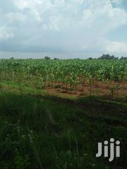 Land 15 Acre For Sale With Ready Title Deed | Land & Plots For Sale for sale in Trans-Nzoia, Kwanza