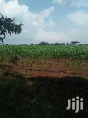 Land 50 Acres With Ready Title Deed | Land & Plots For Sale for sale in Trans-Nzoia, Kwanza