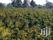 60 Acres Coffee Farm With Processing Machines In Kitale | Land & Plots For Sale for sale in Uasin Gishu, Kimumu
