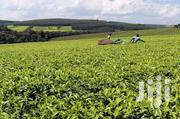 Kericho Tea Farms For Sale | Land & Plots For Sale for sale in Kericho, Kapkatet