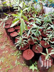 Seedling Bags | Garden for sale in Nairobi, Nairobi Central