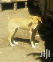 Nice Puppy | Dogs & Puppies for sale in Nakuru, Gilgil