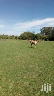 100 Acres Neighbouring Masai Mara Game Reserve  For Sale | Land & Plots For Sale for sale in Narok, Mara