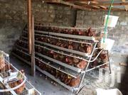 Chicken Cages | Livestock & Poultry for sale in Nairobi, Kasarani