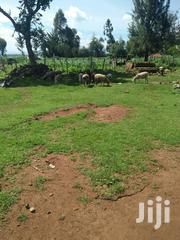 Land 2 Acres In Waitaluk 500metres From Main Road Kitale Eldoret | Land & Plots For Sale for sale in Trans-Nzoia, Sirende