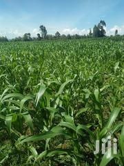 Land 14 Acres 5 Kilometers From Main Highway | Land & Plots For Sale for sale in Trans-Nzoia, Sirende