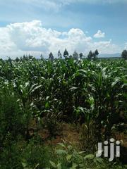 Land 25 Acres With Ready Title Deed | Land & Plots For Sale for sale in Trans-Nzoia, Motosiet