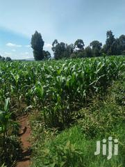 Land 20 Acres In Kaplamai | Land & Plots For Sale for sale in Trans-Nzoia, Kaplamai