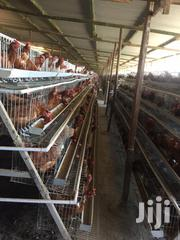 Galvanised Battery Chicken Cage | Pet's Accessories for sale in Nairobi, Nyayo Highrise
