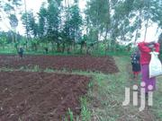 FARM FOR SALE/ LEASE PER ANNUM | Land & Plots For Sale for sale in Murang'a, Kamahuha