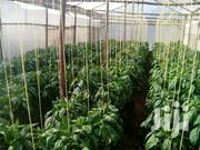 Greenhouse Wood Frame Metallic Green House | Other Services for sale in Nakuru, Lanet/Umoja