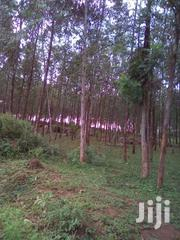 8 ACRES WITH MATURE TREES | Land & Plots For Sale for sale in Homa Bay, Central Kasipul