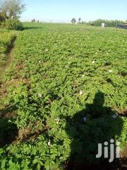 One Acre Of Land On Sale | Land & Plots For Sale for sale in Kiambu, Kijabe