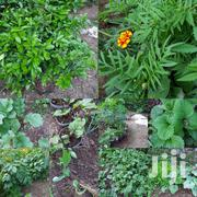 Organically Grown Herbs | Feeds, Supplements & Seeds for sale in Kajiado, Ongata Rongai
