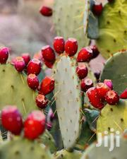 Prickly Pear Fruits And Seedlings | Feeds, Supplements & Seeds for sale in Nairobi, Nairobi Central