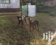 4 Months Old Rot/Gsd Pups, Delivery Free | Dogs & Puppies for sale in Nairobi, Kahawa West