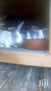 Rabbit And Product | Livestock & Poultry for sale in Nairobi, Embakasi