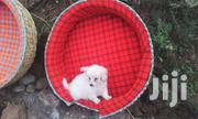 Pet Baskets | Home Accessories for sale in Nairobi, Ngando