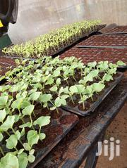Sweet Melon Seedlings | Feeds, Supplements & Seeds for sale in Kiambu, Juja
