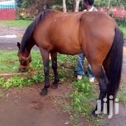 Horse For Sale 7year Old | Other Animals for sale in Kiambu, Ndenderu