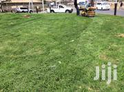 Carpet Grass | Garden for sale in Kiambu, Limuru Central