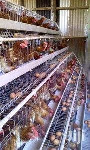 Battery Chicken Cages | Livestock & Poultry for sale in Nairobi, Kasarani