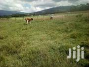 400 Acres Of Land For Sale In Nyahururu Touching A River. | Land & Plots For Sale for sale in Nyandarua, Wanjohi