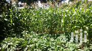 3/4 Plot For Sale Gathaithi | Land & Plots For Sale for sale in Kiambu, Githunguri