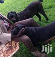 Animal Services Professional Dog Trainers | Pet Services for sale in Kiambu, Muchatha