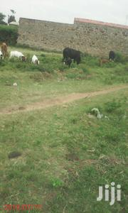 66*100 Located In Kiganjo Thika Call . | Land & Plots For Sale for sale in Kiambu, Hospital (Thika)