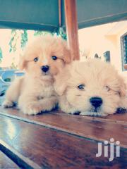 Pet Dogs Male And Female | Dogs & Puppies for sale in Mombasa, Bamburi