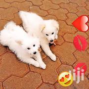 A Dog and Puppies | Dogs & Puppies for sale in Kiambu, Kabete