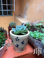 Indoor Plants | Garden for sale in Nairobi, Kasarani