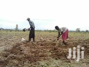Agricultural Land Suitable for Horticulture Farming . | Land & Plots For Sale for sale in Kisumu, East Kano/Wawidhi