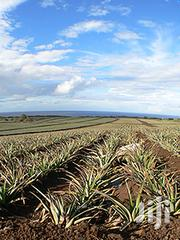 100 Acres Pineapple Farm | Land & Plots For Sale for sale in Kilifi, Malindi Town