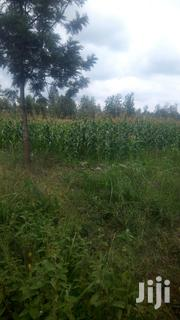 1¹/4acre KENOL Township Muranga With Free Hold Title Deed. | Land & Plots For Sale for sale in Murang'a, Kimorori/Wempa