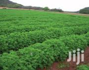 Agriculture Extension Job - Nyahururu, Ol-jororok | Farming & Veterinary Jobs for sale in Laikipia, Nanyuki
