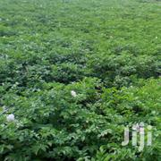 Landfam | Land & Plots For Sale for sale in Nyandarua, Engineer