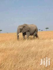 100acres For Sale In Masai Mara | Land & Plots For Sale for sale in Narok, Mara
