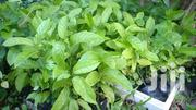 Passion Fruit Seedlings Purple Not Grafted | Feeds, Supplements & Seeds for sale in Machakos, Kinanie
