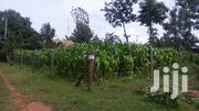 50 by 100 Plot Kiminini- Birunda Market With Title Deed | Land & Plots For Sale for sale in Trans-Nzoia, Kiminini