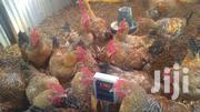 Mature Kienyeji Chickens | Livestock & Poultry for sale in Machakos, Muthwani
