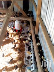 Improved Kienyeji Chicks | Livestock & Poultry for sale in Kisumu, Kondele