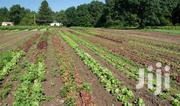INVEST Agri Business Partnership Horticultural Farming Lease Land | Land & Plots for Rent for sale in Kiambu, Githunguri