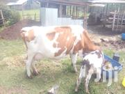 Third Calf | Livestock & Poultry for sale in Nandi, Kapsabet