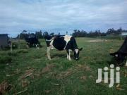 4dairy Cow | Livestock & Poultry for sale in Nyandarua, Magumu