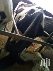 Freshian Cows High Breed | Livestock & Poultry for sale in Kajiado, Ngong
